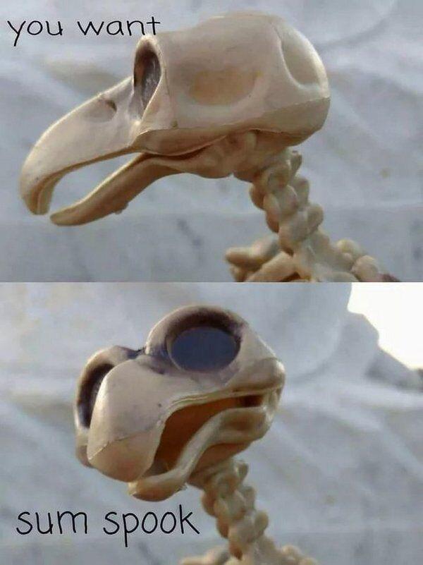 Мем о скелетах: что значит и откуда он взялся