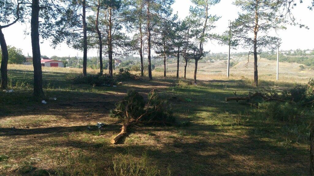 """""""Санітари"""" лісу: на окупованому Донбасі масово рубають дерева"""
