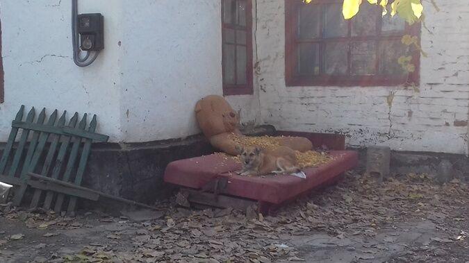 В Кривом Роге россиянин отрезал уши жертвам и скармливал собакам. Одна из собак попала на фото