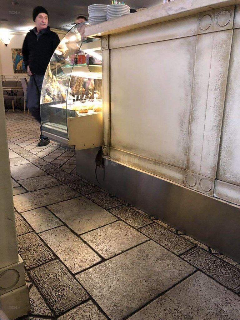 """Кондитерська """"Волконський"""" у центрі Києва відзначилася: моторошне фото пацюка"""