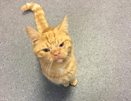 Саул: що це за кіт і як він потрапив у меми. Фото