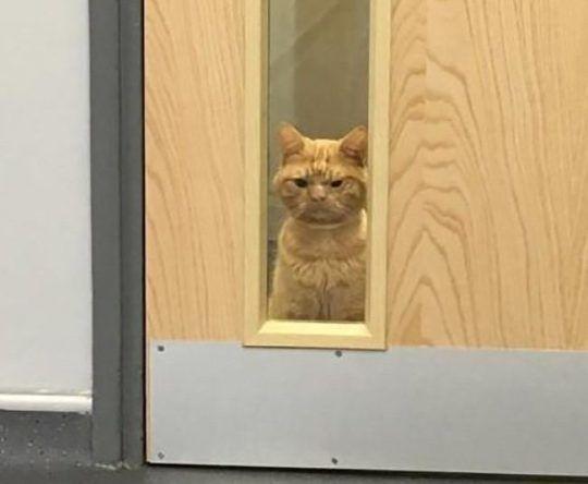 Саул: что это за кот и как он попал в мемы. Фото
