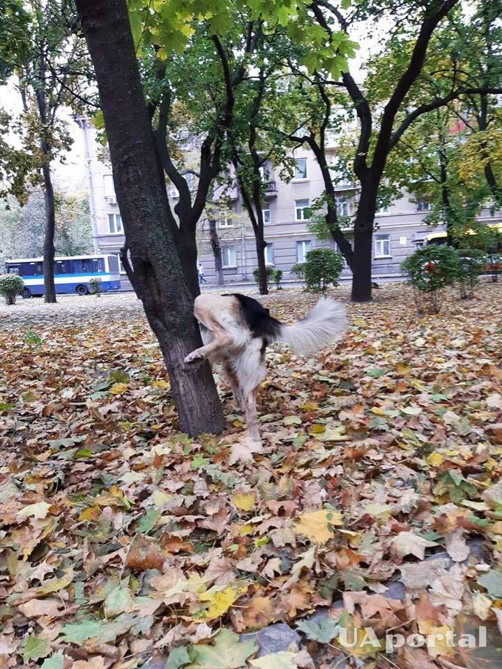 Пёс Миша прокомментировал реакцию на отставку постпреда Порошенко в Крыму