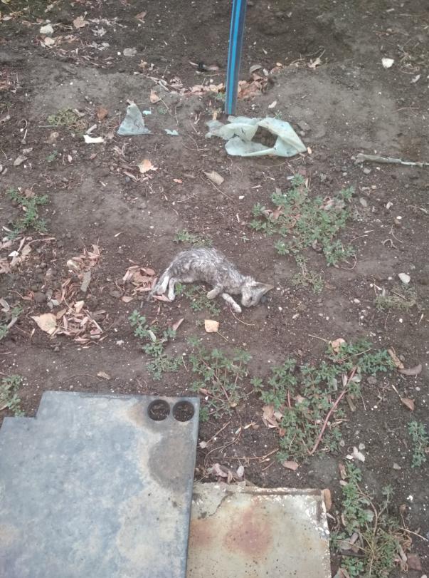 Опубликованы свежие фото из города-катастрофы в оккупированном Крыму