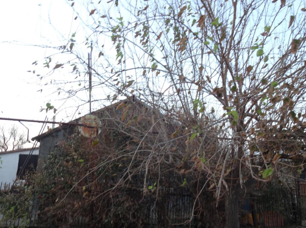 """Жизнь на кислоте: в сети показали новые фото последствий """"химатаки"""" в Крыму"""