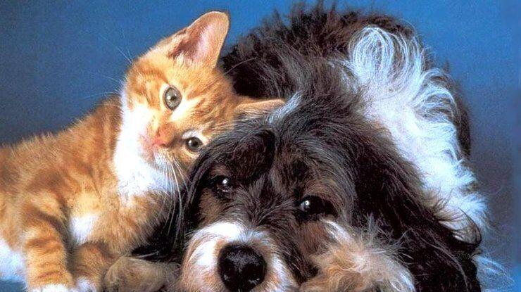 Всемирный день защиты животных: картинки и лучшие поздравления