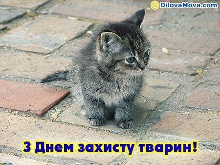 Всесвітній день захисту тварин: картинки і кращі поздоровлення