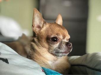 В сеть попало новое видео с Паниным и собакой
