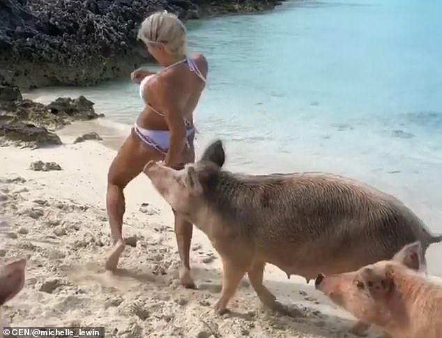 Красуню Мішель Левін вкусила за попу свиня: відео події і фото наслідків