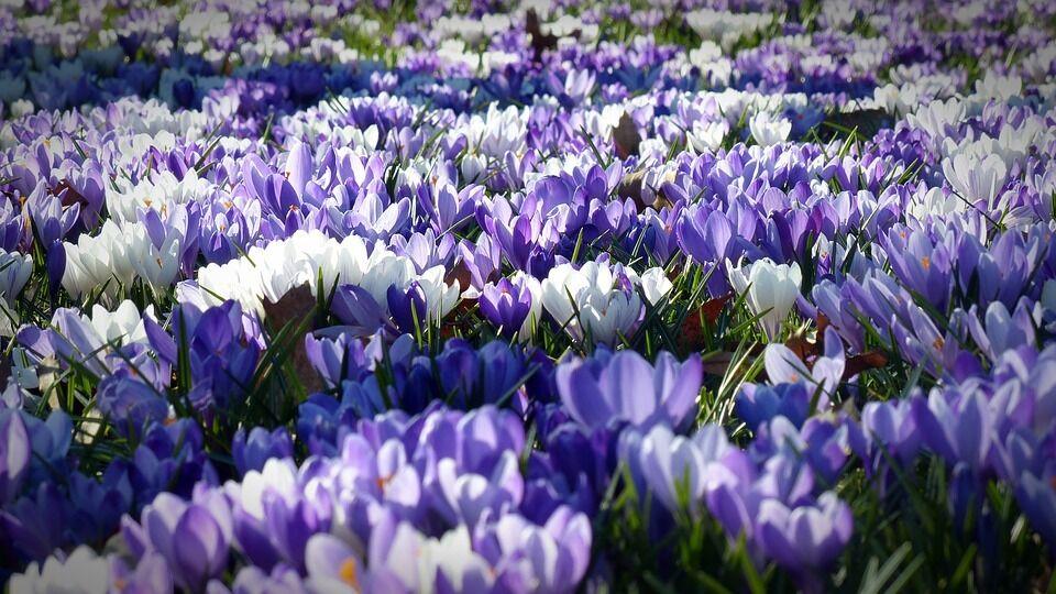 Картинки с первым днем весны: доброе утро, весна!
