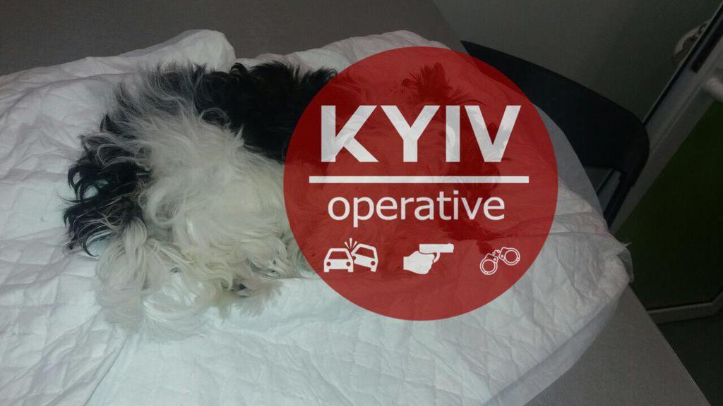 Максим Чаленко устроил пьяный дебош в Киеве: кто он и чем отличился раньше