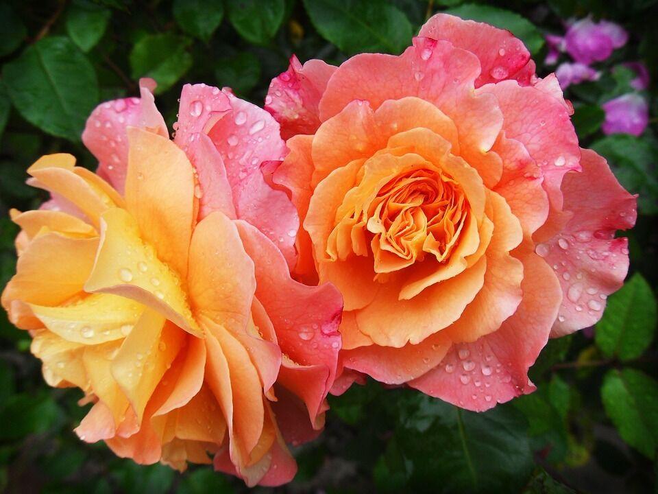 Фото с 8 Марта: самые красивые цветы