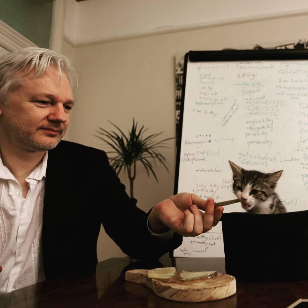 Чому всіх хвилює доля кота Ассанжа Мічі і що з ним зараз