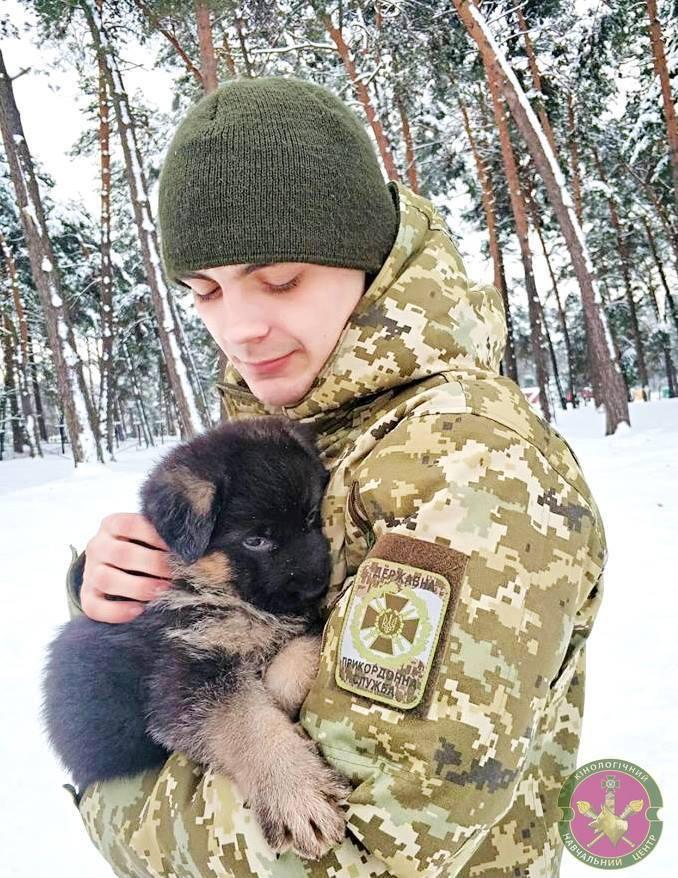 День кінолога в Україні: картинки для привітання