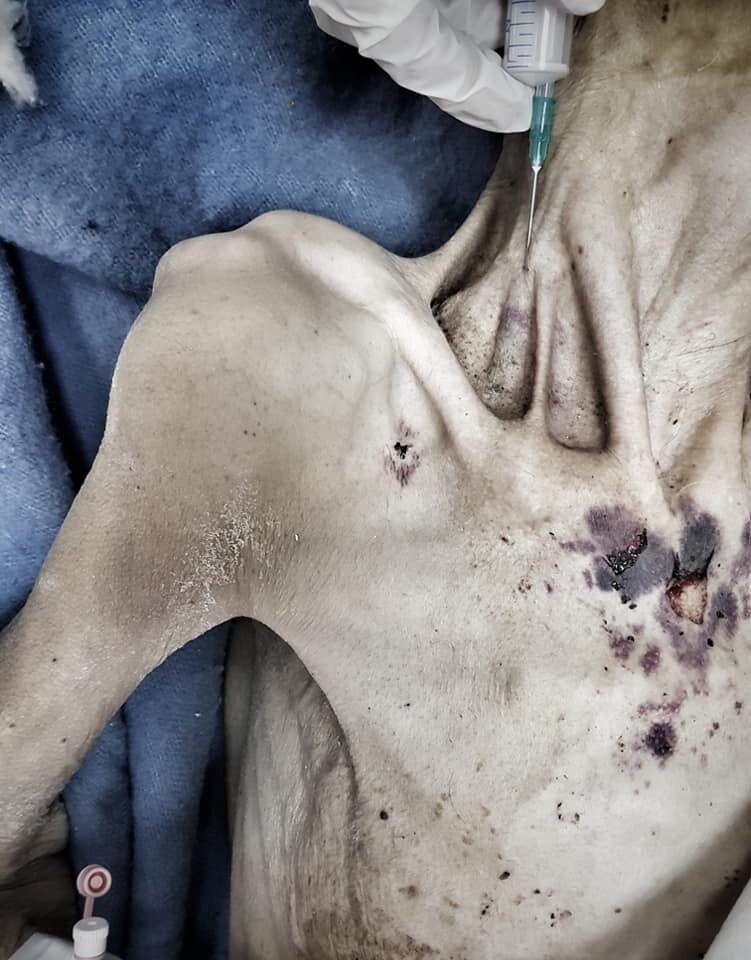 Жінка-мумія померла: хто її довів, що відомо про сина і моторошні фото