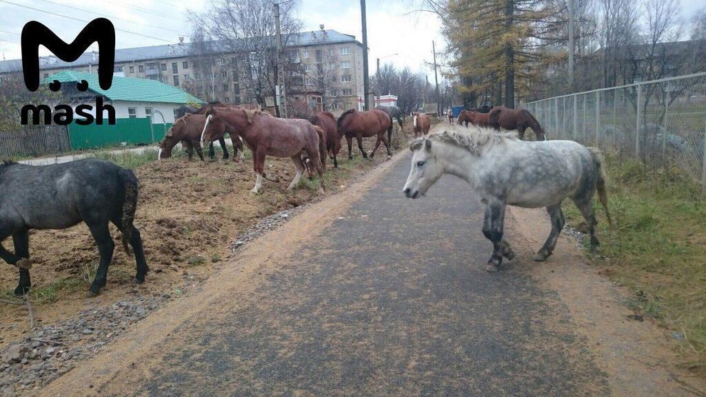 """""""Оккупация - это теперь так"""": в России случился звериный апокалипсис"""