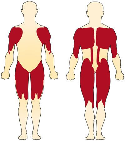 М'язи, які страждають при СМА