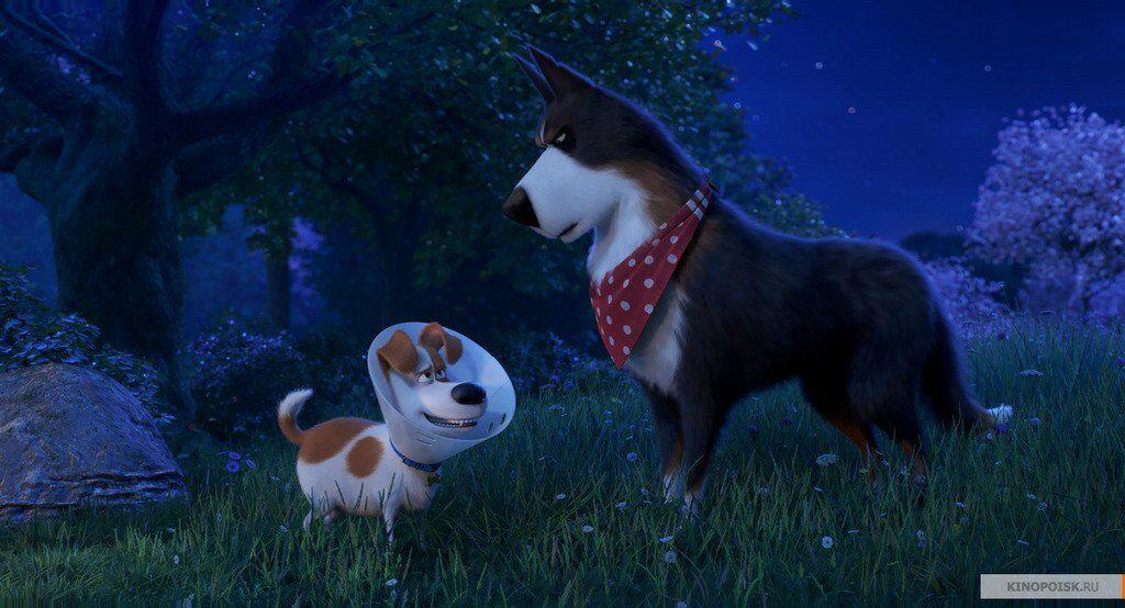 Тайная жизнь домашних животных 2: рейтинг и отзывы, смотреть трейлер