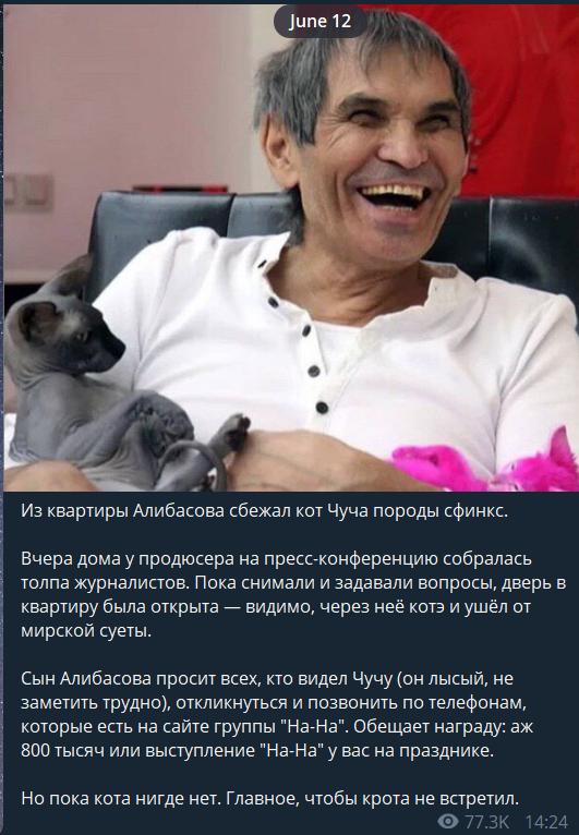 Чуча: що це за кіт і скільки заплатить за нього Барі Алібасов