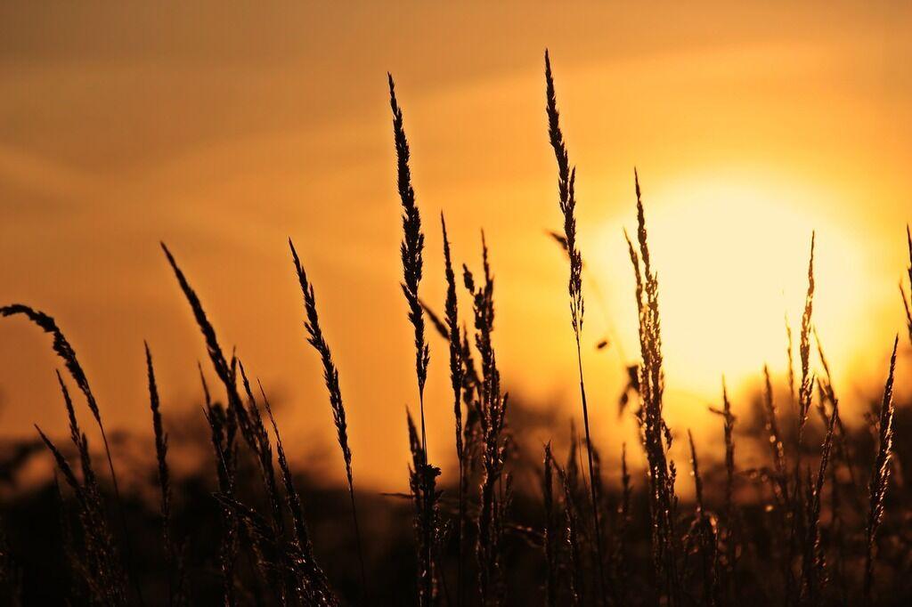 День летнего солнцестояния: что нужно делать, приметы