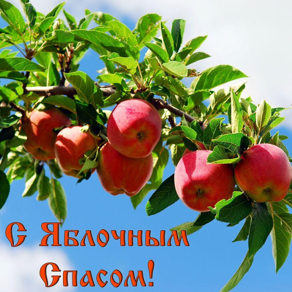 Яблочный спас 2019: лучшие поздравления, открытки и картинки