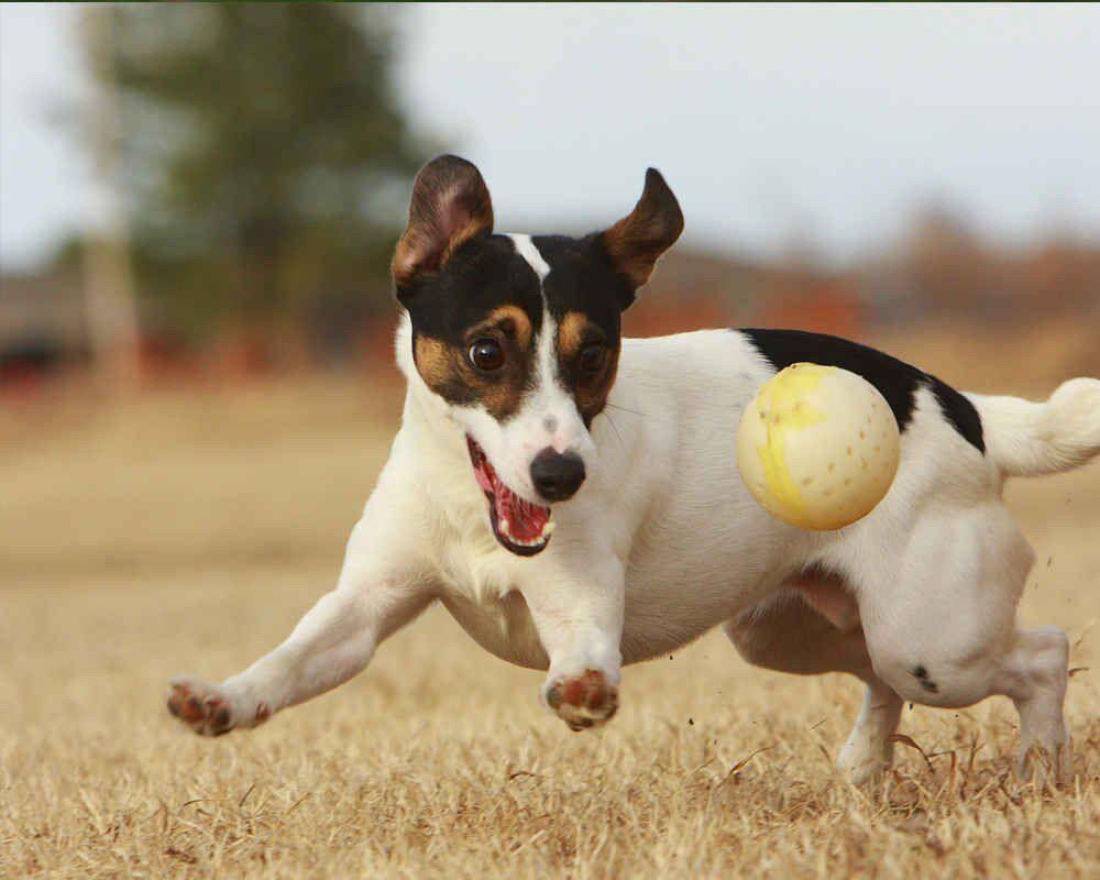 День собак 26 августа: что это за праздник, его история и традиции