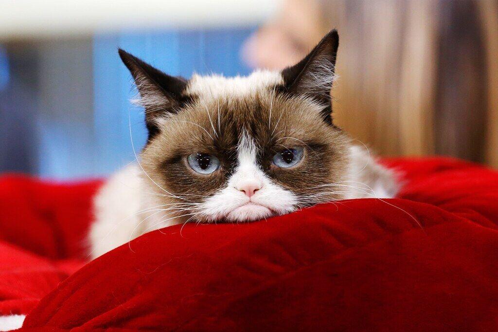 Всемирный день кошек 8 августа: история праздника, фото и поздравления для котолюбов