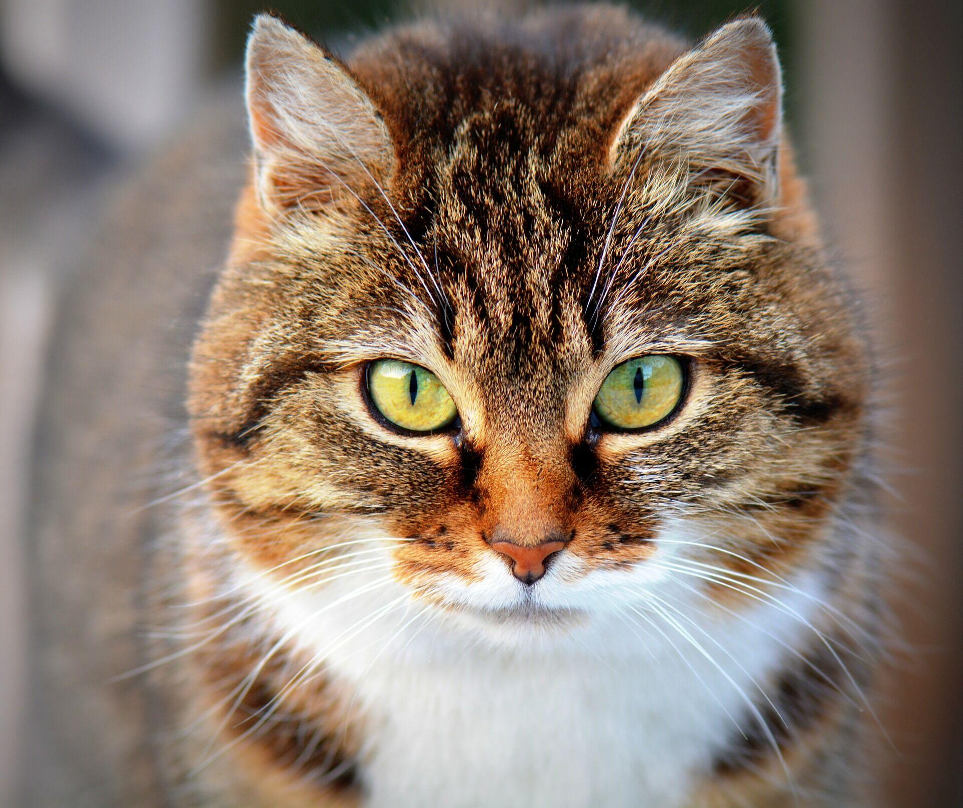 День кошки 22 февраля: кто и где его отмечает, картинки для поздравлений