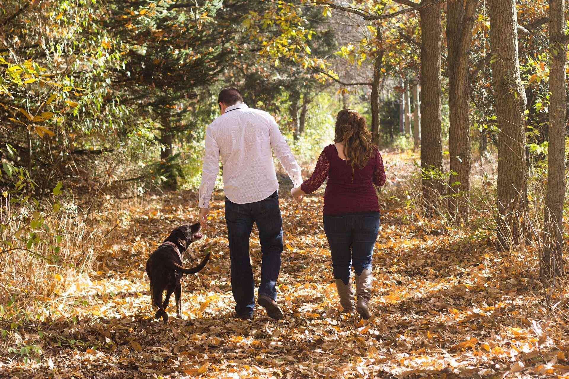 День прогулки с собакой 22 февраля: лучшие картинки и поздравления в прозе