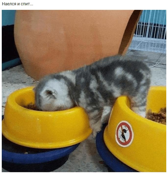 Наївся і спить (Кошеня померло): звідки взявся та що значить мем, смішні картинки