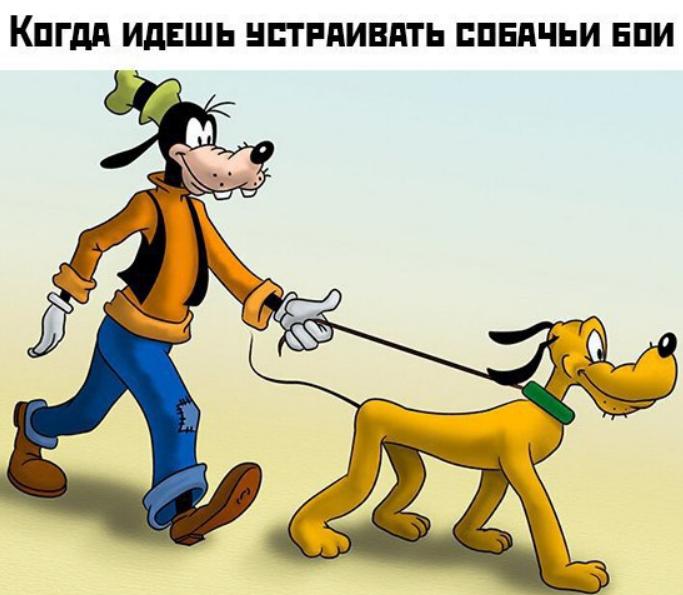 Гуф і собака: кращі меми та жарти на злобу дня