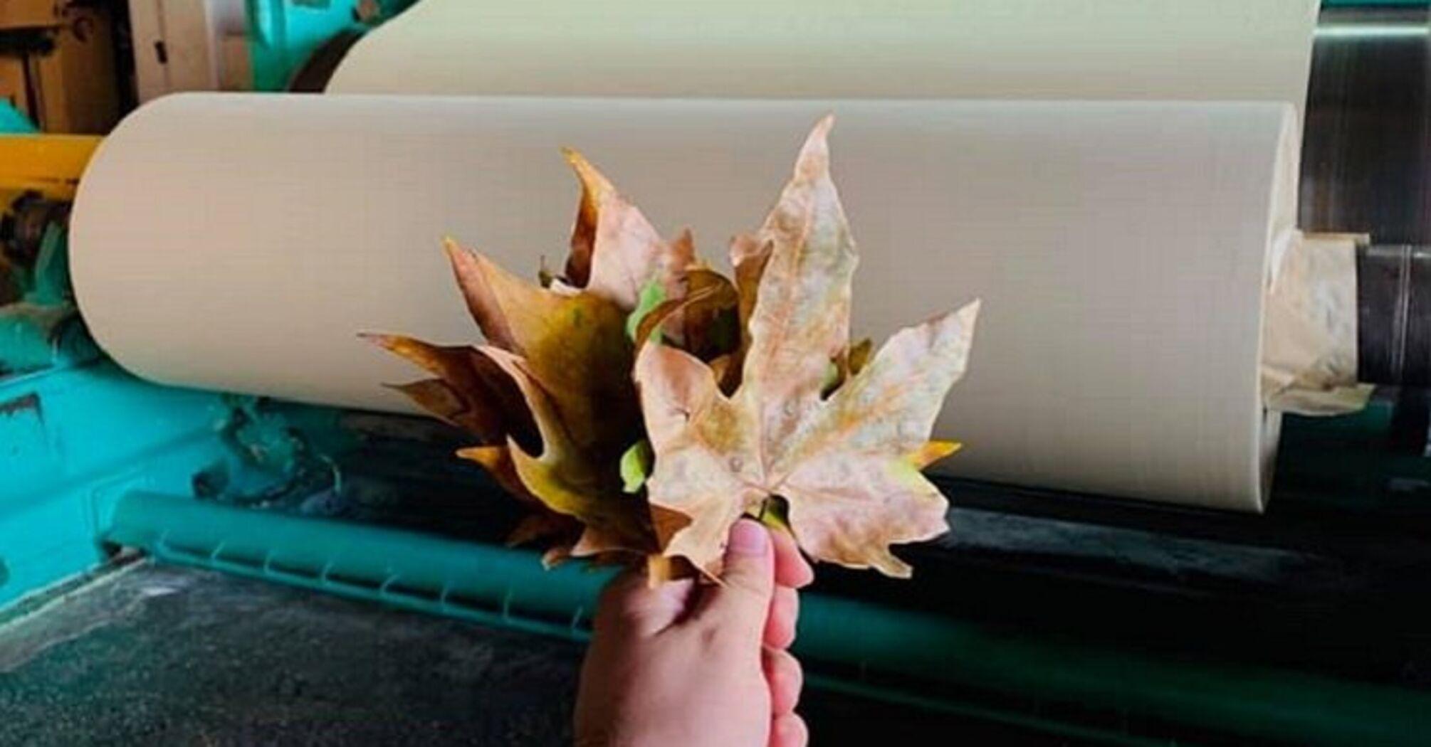 Украинский стартап выпустил первую большую партию бумаги из опавших листьев