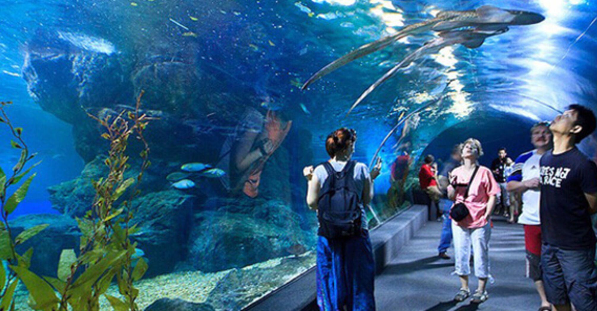 У Київському зоопарку побудують підземний океанаріум