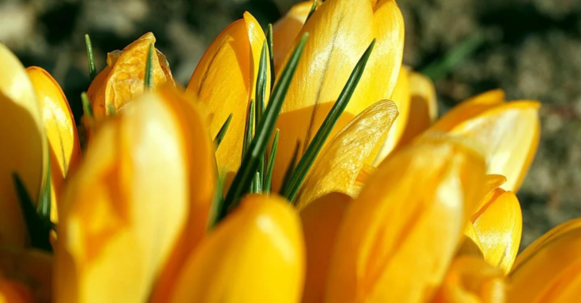 День ангела Світлани: картинки і листівки для привітання з іменинами 2 квітня