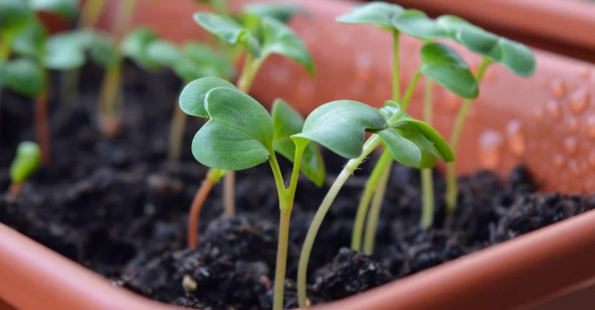 Коли і що можна садити: місячний посівний календар на квітень 2020