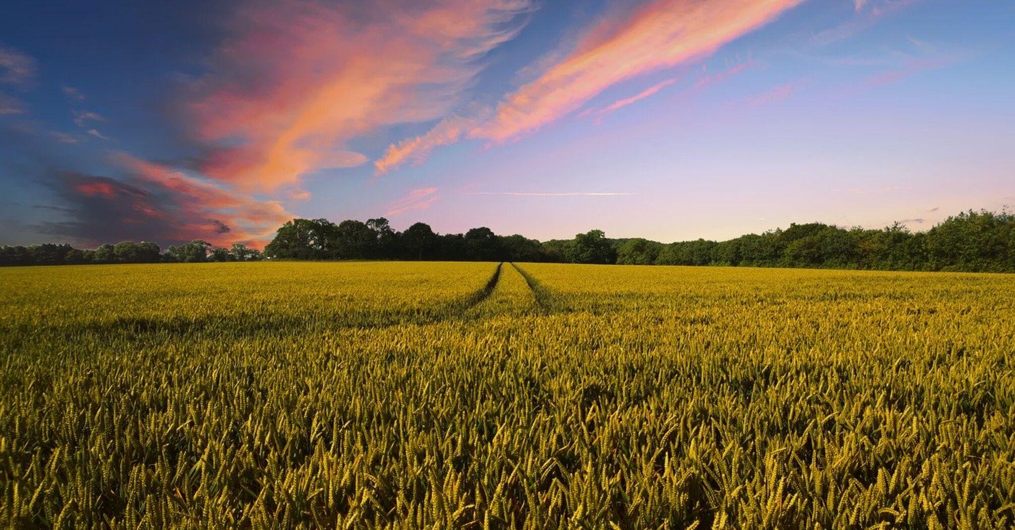 Украина получит $200 млн на земельную реформу