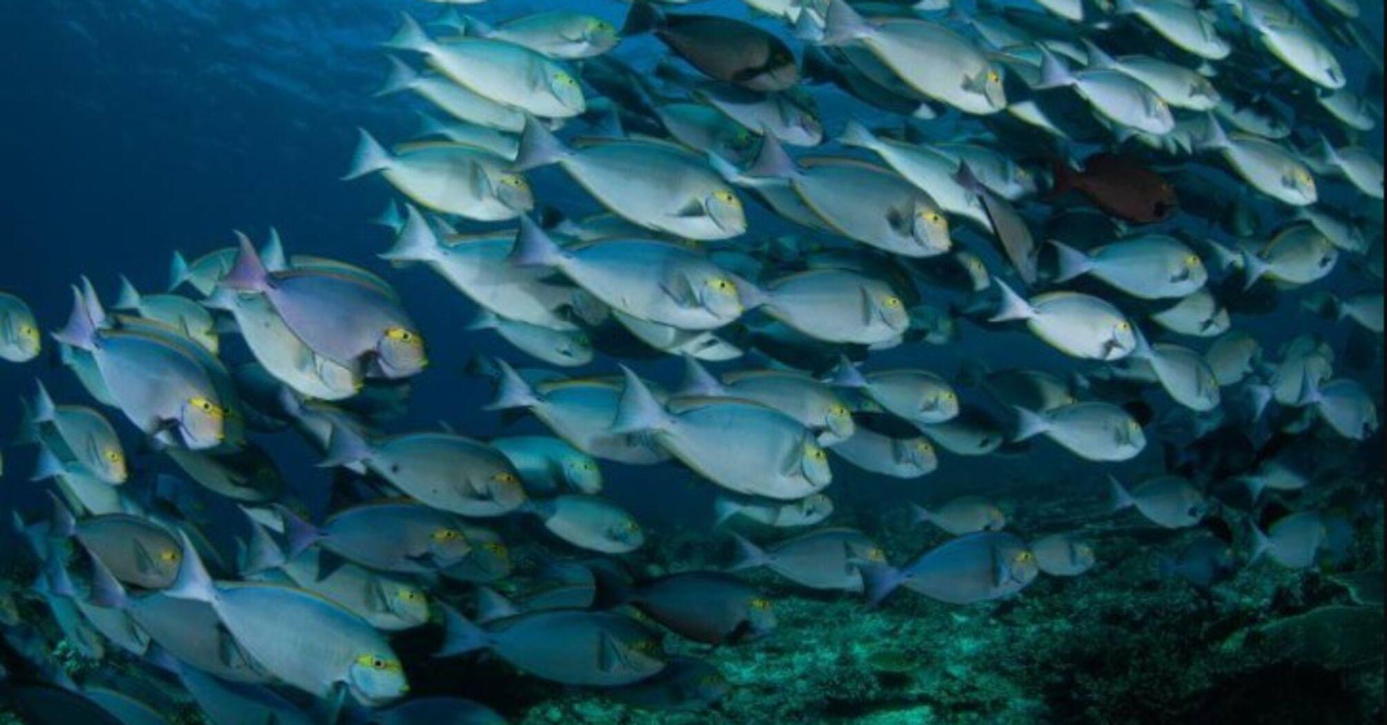 """""""Ми залишимося без риби"""": вчені прогнозують зникнення більшості видів риб до 2048 року"""