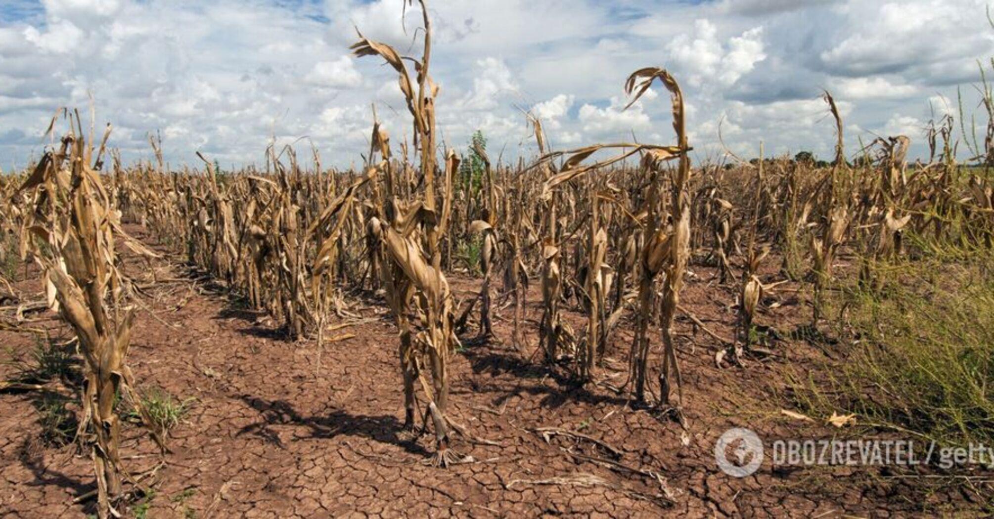 Украинские фермеры поставили ультиматум власти